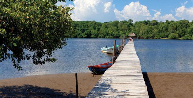 Dans les hautes mangroves de La Encrucijada (sur la côte pacifique, au Soconusco, le Ballenato, à la frontière de la mer et de la mangrove, ce lieu est sans doute le plus paradisiaque du Chiapas. Pour s'y rendre, vous devez prendre un bateau sur la jetée de Las Garzas, à 18 km d'Acapetahua. De la jetée, le voyage en bateau dure environ 20 minutes.