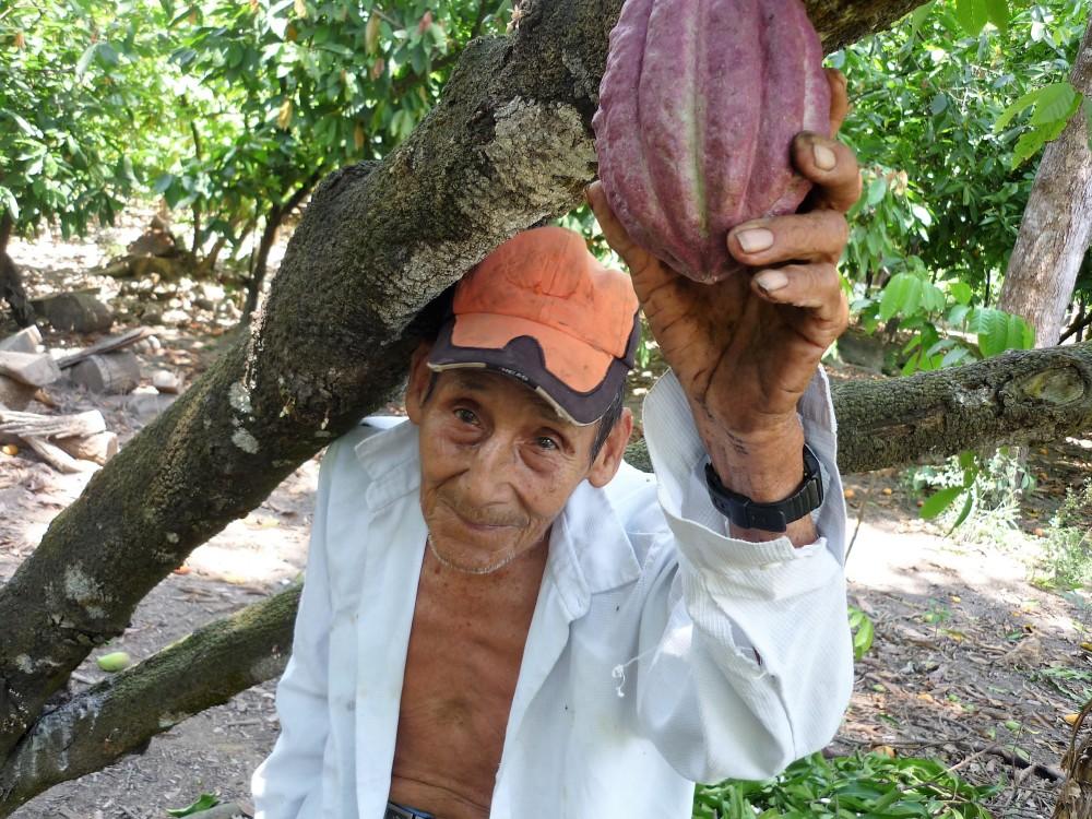 Manuel, comme beaucoup de planteurs est âgé. Il n'a jamais quitté sa plantation près de Mazatan sur la route de la mer où les cacaoyers cohabitent avec les manguiers (Photo FC)