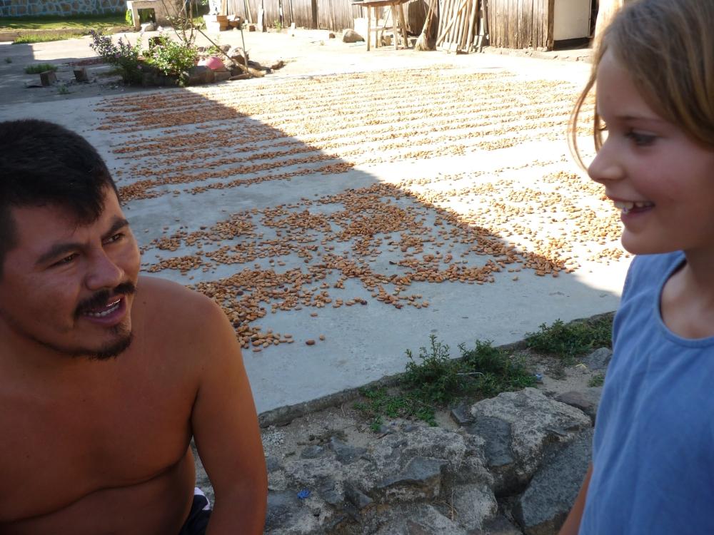 Séchage au soleil des fèves de criollo posées à même le sol pendant une période de trois à cinq jours au cours de laquelle elles sont régulièrement ratissées afin d'accélérer le processus de séchage (Photo FC