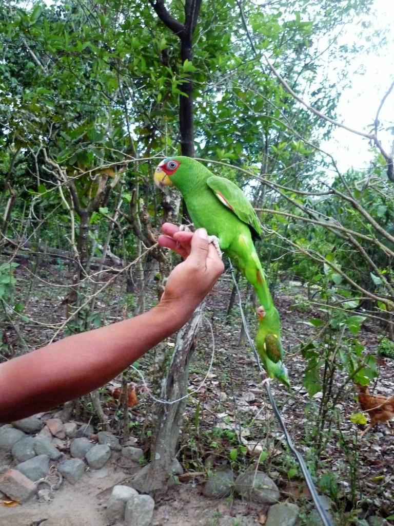 Le Soconusco et ses criollos valent bien un vol (aérien) Photo FC