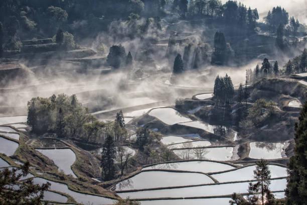 Préfecture de Niigata, rizières en terrasses (Photo DR)