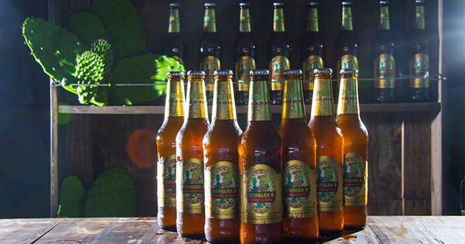 Les seules bières (4,8°) au monde brassées avec du nopal. Elles conviennent particulièrement au diabétiques.