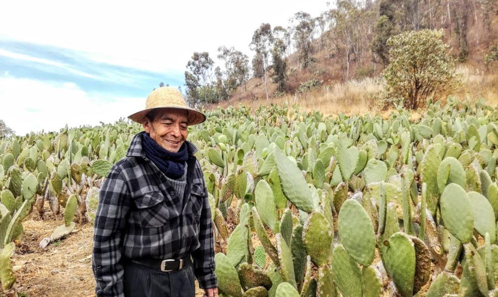 Ce campesino comme 5000 autres dans la délégation de Milpa Alta travaille son champ de nopal au pied du volcan Teutli (Photo FC)