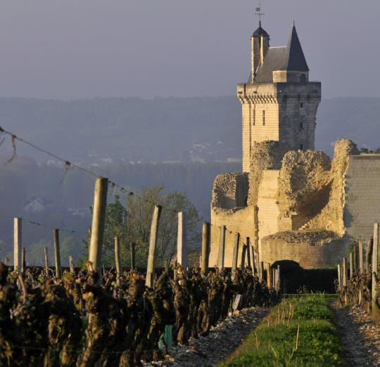 From the vineyard, The Clock Tower of the Fortress of Chinon (DR)