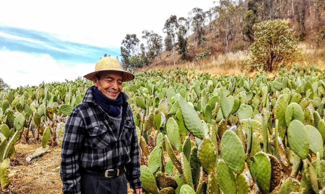 This farmer like 5000 others in the delegation of Milpa Alta happy working his Nopal field at the foot of the volcano.