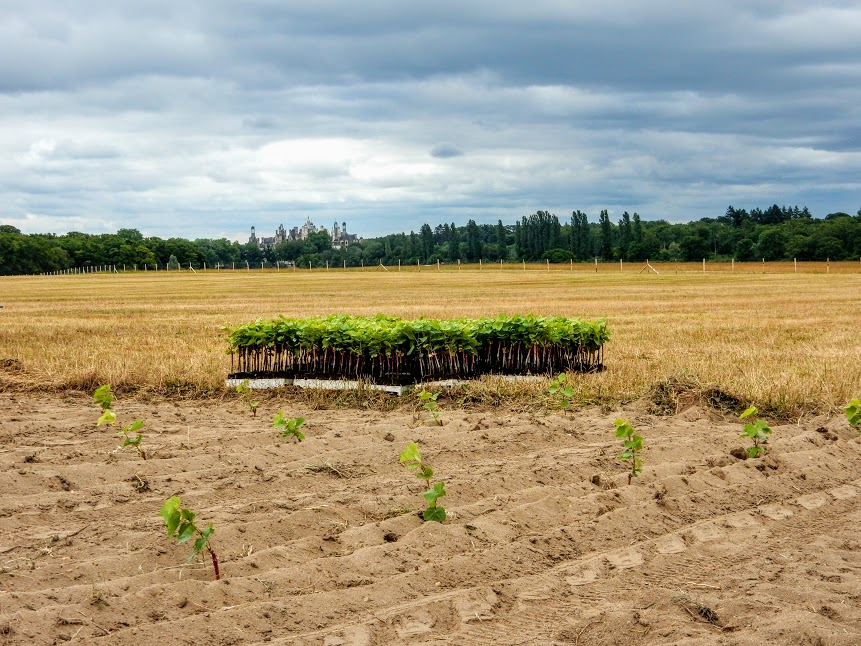 Chambord 2015 replantation du vignoble (Photo FC).JPG