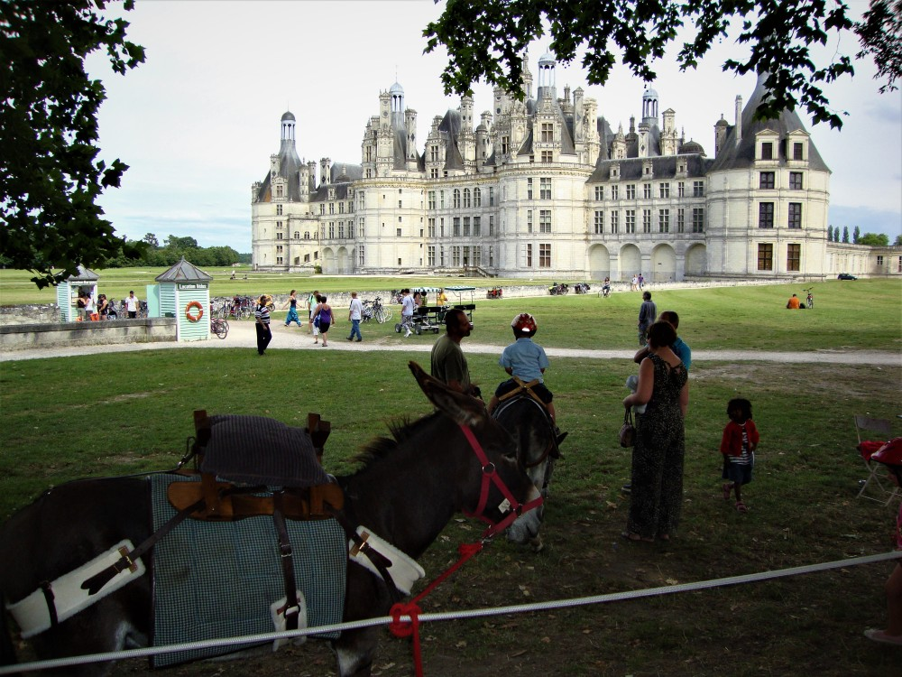 Quiets days in Chambord. This really is a great Chateau for all of the family with so many other activities aside from just the château tour (2471 acres of open access park): Horse and bird of prey show (in the stables of Maurice, Count of Saxony); along the canal, a grand tour (4 km) can be undertaken at any time of the year by foot or by bike and to discover the fauna and the flora, a coachman will take you in a carriage to the private section of the estate. You may catch a glimpse of stags, roebucks or boars who roam freely, or perhaps the amazing osprey who comes to nest on the treetops when the weather is nice (Photo FC)