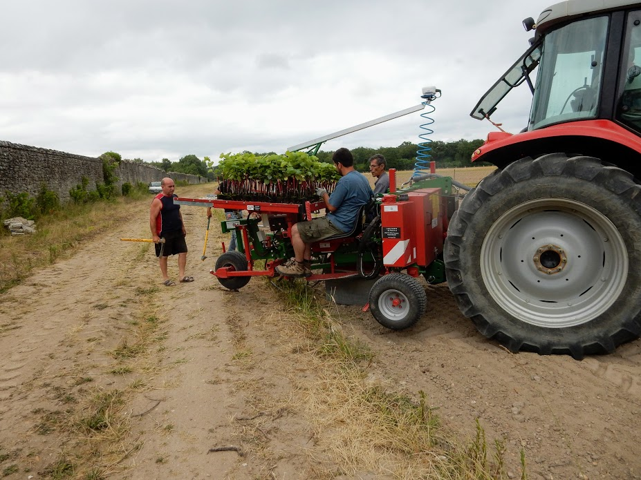 "Shelting by the wall, at a little more than a kilometre from the château, in the locality called ""l'Ormetrou"", 14 hectares of organic vines have been gradually planted since June 2015. The famous day of plantation (Photo FC)"