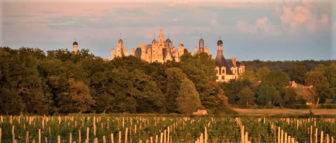 In 2015, in its mission as a heritage conservatory and in a spirit of eco-responsibility, the Domaine national de Chambord decided to replant old grape varieties: four hectares of Romorantin from pre-phylloxera plants and two hectares of Arbois or Pineau menu. Pinot noir (four hectares) and Gamay (0.7 hectares) were also planted to make Cheverny in blends, as well as Sauvignon (three hectares) Photo FC and Domaine de Chambord.