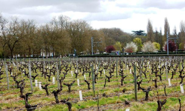 A l'orée du parc de Chenonceau, l'arrêt du train (TER Tours-Vierzon) se fait dans les vignes du château. De tours à Chenonceaux, comptez 28 minutes. Photo prise au printemps (Photo FC)