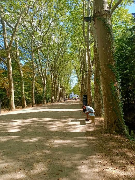 Grande allée d'honneur du château de Chenonceau. Cette longue allée de près d'un kilomètre est bordée de platanes (Photo FC)