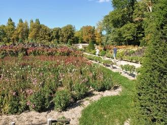 Chenonceau jardin fleurs (Photo FC)