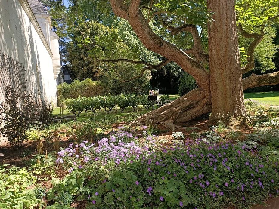 Chenonceau Les Dômes fleurs (Photo FC)