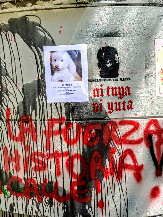 Cette Rosita perdue, les pacos n'auront pas à la craindre ! (Photo FC)